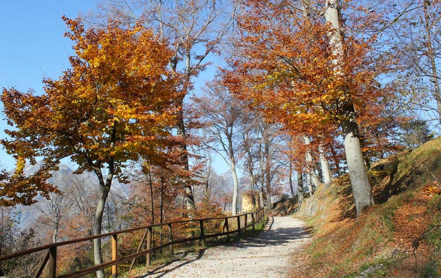 Parco Regionale Monte Barro