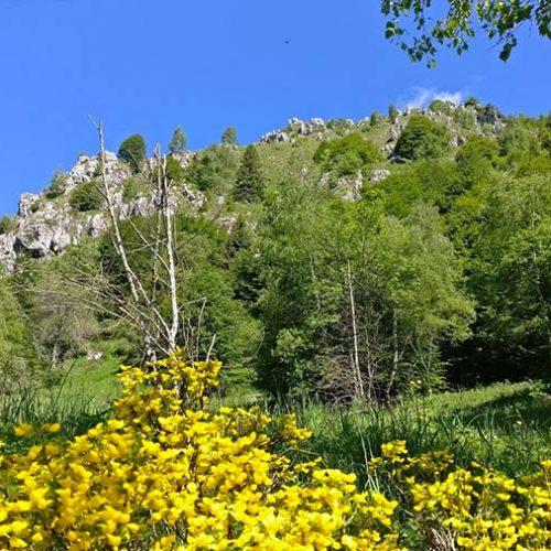 Sentiero per Artavaggio - Valsassina - Lecco
