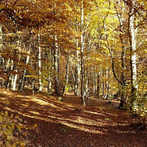 Sentiero nel bosco dei Piani Resinelli verso il Rosalba