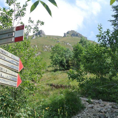 Sentiero nel bosco dei Piani Resinelli Cresta Sinigaglia