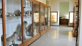 Musei Lecco Museo di Storia Naturale a Lecco