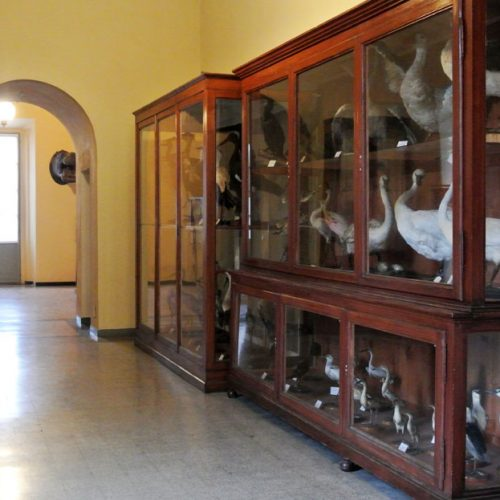 Natural History Museum - Lecco