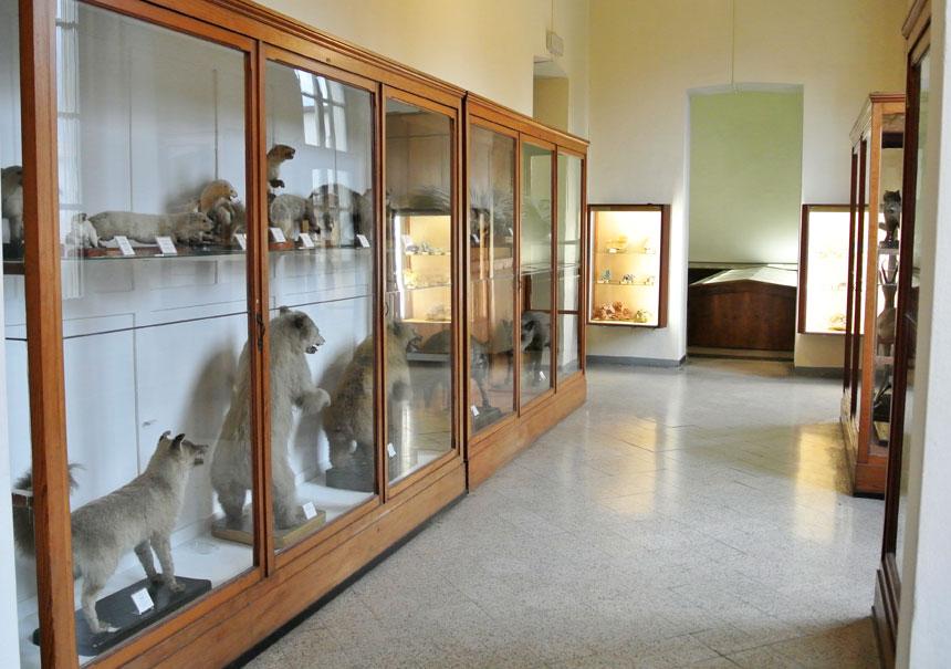 Museo di Storia Naturale a Lecco