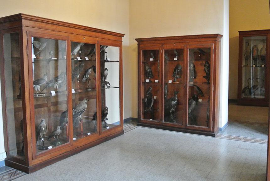 Musei lecco museo di storia naturale a palazzo belgiojoso for Tessera musei lombardia
