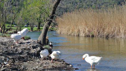 Parco del Segrino
