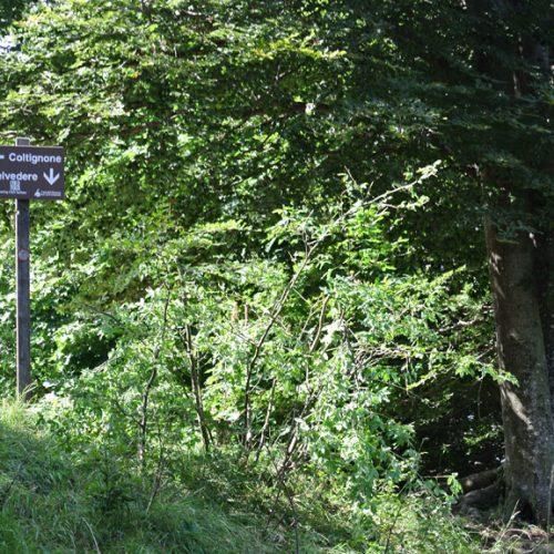 Piani Resinelli segnavia Belvedere Coltignone