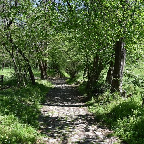 Sentiero per San Michele - Galbiate LC