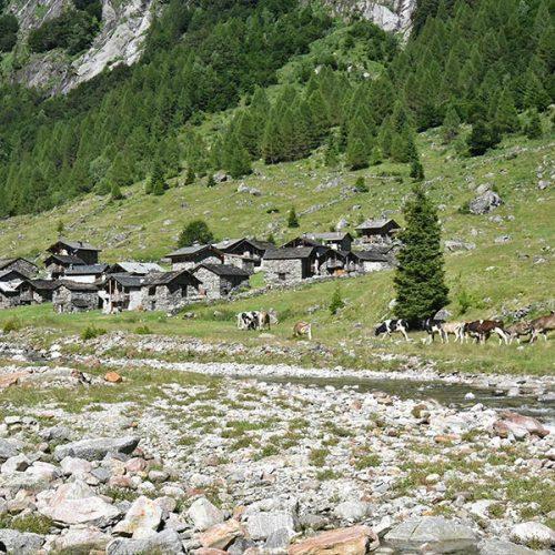 Val Bodengo - Corte Terza
