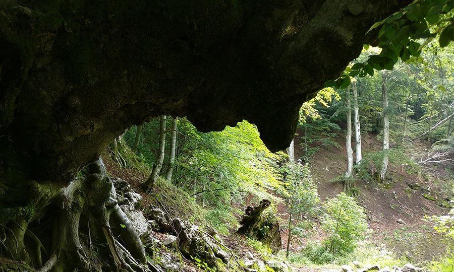Sentiero dei Grandi Alberi - Morterone - Lecco
