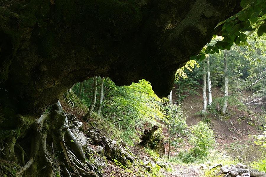 sentiero-dei-grandi-alberi-morterone-lecco