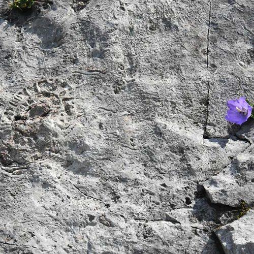 Fossile sul sentiero dal Cainallo al Rifugio Bietti-Buzzi