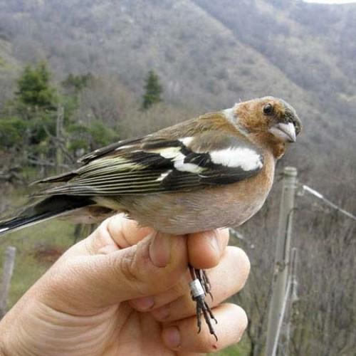 Ornithological Station of Costa Perla